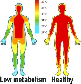 low metabolism and body temperature