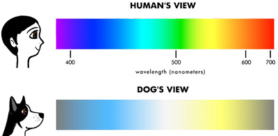 dog visual range compared to humans