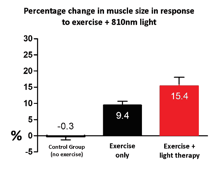exercise and light therapy muscle size