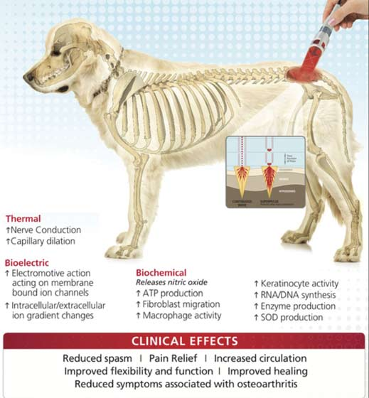 light therapy mechanism in animals