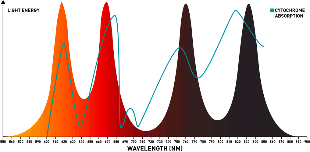 spectrum of red/infrared combo light with cytochrome absorption