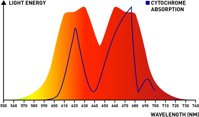 red light device with cytochrome absorption
