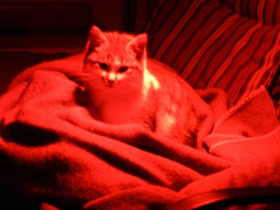 red light therapy for cats